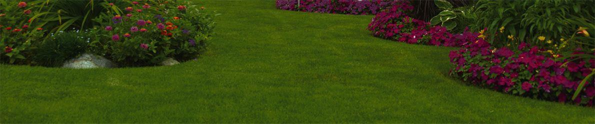 giardinaggio arezzo